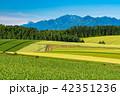 《北海道》美瑛・田園風景パッチワークの路 42351236