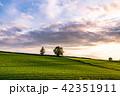 美瑛町 畑 田園風景の写真 42351911