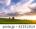 美瑛町 畑 田園風景の写真 42351914