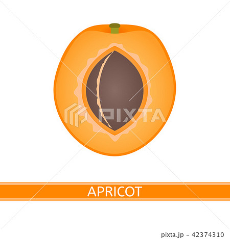 Apricot isolated on white 42374310