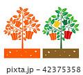 bellpepper plant 42375358