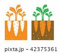 carrot plant 42375361