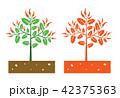 chili plant 42375363