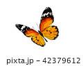 チョウ 蝴蝶 蝶のイラスト 42379612