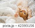 仔猫 猫 子猫の写真 42393156