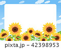 ひまわり 42398953