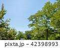 夏 青空 緑の写真 42398993