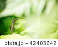 自然 42403642