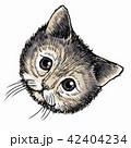 ねこ ネコ 猫のイラスト 42404234
