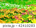 花 植物 カラフルの写真 42410283