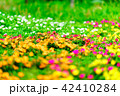 花 植物 カラフルの写真 42410284