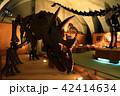 ナイトミュージアム(トリケラトプス) 42414634
