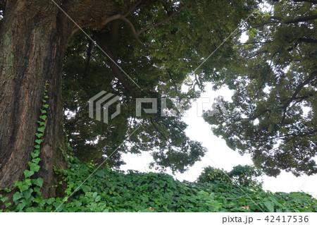 生い茂った植物 Lively plants 42417536