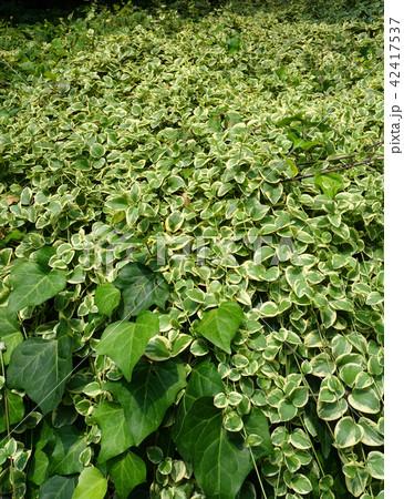 植物の絨毯 Lively plants 42417537