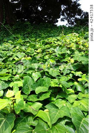 植物の絨毯 Lively plants 42417538