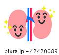 腎臓 臓器 内臓のイラスト 42420089