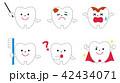 歯 42434071