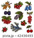 くだもの フルーツ 実のイラスト 42436493