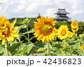 ヒマワリとお城 42436823