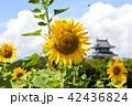 ヒマワリとお城 42436824