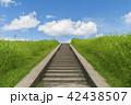 夏の青空と雲と緑 42438507