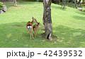 奈良公園 親子鹿 42439532
