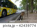 奈良公園の鹿 42439774