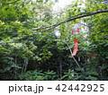 木の中の風鈴 42442925
