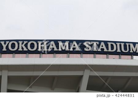 横浜スタジアム 42444831