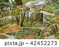 森林 林 森の写真 42452273