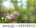 野花 花 アップの写真 42458810