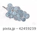 Grape 42459239