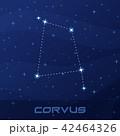 星座 カラス属 カラスのイラスト 42464326
