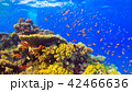 Tropical Fish on Vibrant Coral Reef 42466636