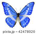 モルフォ蝶 42478020