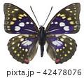 オオムラサキ蝶 42478076
