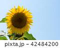 花 青空 夏の写真 42484200
