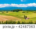 美瑛の丘 赤い屋根の家 夏の写真 42487363