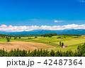 美瑛の丘 赤い屋根の家 夏の写真 42487364