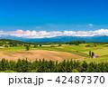 美瑛の丘 赤い屋根の家 夏の写真 42487370