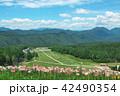 ゆり 晴れ 高原の写真 42490354
