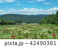 ゆりパーク ゆり園 ゆりの写真 42490361
