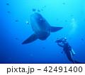 マンボウ Sunfish 42491400