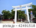 唐津神社 神社 鳥居の写真 42491518