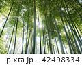 竹 竹林 自然の写真 42498334