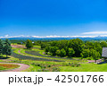 北海道 美瑛 晴れの写真 42501766