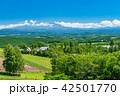 北海道 美瑛 晴れの写真 42501770