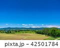 美瑛町 美瑛の丘 夏の写真 42501784