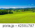 美瑛町 美瑛の丘 夏の写真 42501787
