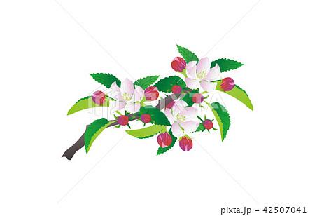 都道府県の花青森リンゴ 42507041
